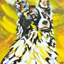 Border Collie 8x10 ins SOLD